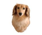 切抜きをした犬の画像
